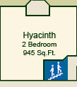 The Hyacinth Suite